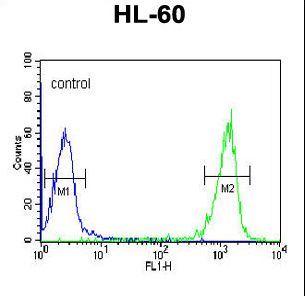 PATL1 Antibody - PATL1 Antibody flow cytometry of HL-60 cells (right histogram) compared to a negative control cell (left histogram). FITC-conjugated goat-anti-rabbit secondary antibodies were used for the analysis.