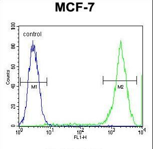 PCDH20 Antibody - PCDH20 Antibody flow cytometry of MCF-7 cells (right histogram) compared to a negative control cell (left histogram). FITC-conjugated goat-anti-rabbit secondary antibodies were used for the analysis.