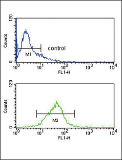 PCSK9 Antibody - PCSK9 Antibody flow cytometry of Jurkat cells (bottom histogram) compared to a negative control cell (top histogram). FITC-conjugated goat-anti-rabbit secondary antibodies were used for the analysis.
