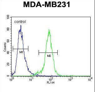 PDE12 Antibody flow cytometry of MDA-MB231 cells (right histogram) compared to a negative control cell (left histogram). FITC-conjugated goat-anti-rabbit secondary antibodies were used for the analysis.