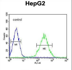 PDHA1 / PDH E1 Alpha Antibody - BDHA1 Antibody flow cytometry of HepG2 cells (right histogram) compared to a negative control cell (left histogram). FITC-conjugated goat-anti-rabbit secondary antibodies were used for the analysis.