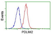 Flow cytometry of Jurkat cells, using anti-PDLIM2 antibody (Red), compared to a nonspecific negative control antibody (Blue).