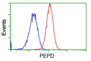 Flow cytometric Analysis of Hela cells, using anti-PEPD antibody, (Red), compared to a nonspecific negative control antibody, (Blue).