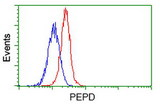 Flow cytometric Analysis of Jurkat cells, using anti-PEPD antibody, (Red), compared to a nonspecific negative control antibody, (Blue).