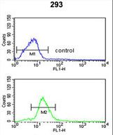 PEX11A Antibody - PEX11A Antibody flow cytometry of 293 cells (bottom histogram) compared to a negative control cell (top histogram). FITC-conjugated goat-anti-rabbit secondary antibodies were used for the analysis.
