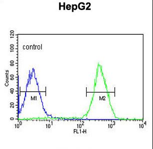 PUR4 Antibody flow cytometry of HepG2 cells (right histogram) compared to a negative control cell (left histogram). FITC-conjugated goat-anti-rabbit secondary antibodies were used for the analysis.