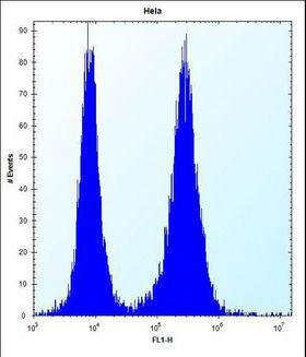 PHF5A / INI Antibody - PHF5A Antibody flow cytometry of HeLa cells (right histogram) compared to a negative control cell (left histogram). FITC-conjugated donkey-anti-rabbit secondary antibodies were used for the analysis.