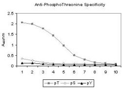 Phosphothreonine Antibody - Anti-Phosphothreonine Antibody - ELISA. ELISA results of Mab anti-phosphothreonine antibody tested against BSA conjugates of pT, pY and pS. Each well was coated with 0.1 ug of conjugate. The starting dilution of antibody was 1:1000 and each point on the X-axis represents a 2-fold dilution. HRP conjugated Gt-a-Mouse IgG (H&L) and TMB substrate were used for detection.