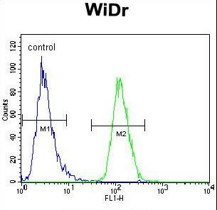 PIK3R5 Antibody - PIK3R5 Antibody flow cytometry of WiDr cells (right histogram) compared to a negative control cell (left histogram). FITC-conjugated goat-anti-rabbit secondary antibodies were used for the analysis.