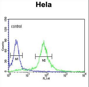 PIK4CB / PI4KB Antibody - PIK4CB Antibody flow cytometry of HeLa cells (right histogram) compared to a negative control cell (left histogram). FITC-conjugated goat-anti-rabbit secondary antibodies were used for the analysis.