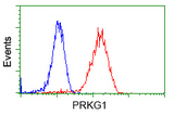 Flow cytometric Analysis of Jurkat cells, using anti-PRKG1 antibody, (Red), compared to a nonspecific negative control antibody, (Blue).
