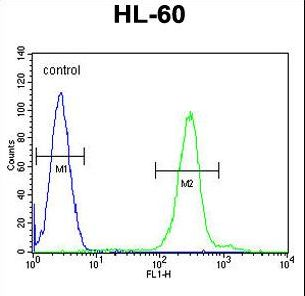 PLA2G2C Antibody flow cytometry of HL-60 cells (right histogram) compared to a negative control cell (left histogram). FITC-conjugated goat-anti-rabbit secondary antibodies were used for the analysis.