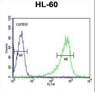 PLCB1 / Phospholipase C Beta 1 Antibody - PLCB1 Antibody flow cytometry of HL-60 cells (right histogram) compared to a negative control cell (left histogram). FITC-conjugated goat-anti-rabbit secondary antibodies were used for the analysis.