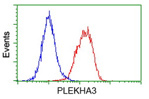 PLEKHA3 Antibody - Flow cytometry of HeLa cells, using anti-PLEKHA3 antibody (Red), compared to a nonspecific negative control antibody (Blue).