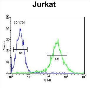 PKHH2 Antibody flow cytometry of Jurkat cells (right histogram) compared to a negative control cell (left histogram). FITC-conjugated goat-anti-rabbit secondary antibodies were used for the analysis.