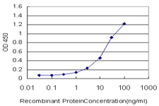 PLGLB2 / PLGLB1 Antibody - Detection limit for recombinant GST tagged PLGLB2 is approximately 0.3 ng/ml as a capture antibody.