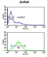 PLN / Phospholamban Antibody - PLB-T17 Antibody flow cytometry of Jurkat cells (bottom histogram) compared to a negative control cell (top histogram). FITC-conjugated goat-anti-rabbit secondary antibodies were used for the analysis.
