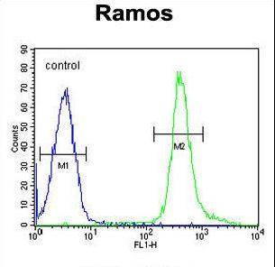 PNLDC1 Antibody - PNLDC1 Antibody flow cytometry of Ramos cells (right histogram) compared to a negative control cell (left histogram). FITC-conjugated goat-anti-rabbit secondary antibodies were used for the analysis.