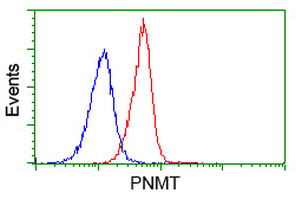 Flow cytometry of Jurkat cells, using anti-PNMT antibody (Red), compared to a nonspecific negative control antibody (Blue).