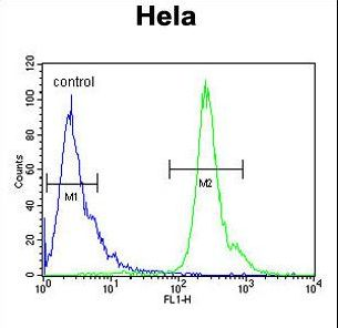 PNPLA8 Antibody flow cytometry of HeLa cells (right histogram) compared to a negative control cell (left histogram). FITC-conjugated goat-anti-rabbit secondary antibodies were used for the analysis.