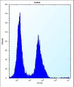 PODNL1 Antibody flow cytometry of Jurkat cells (right histogram) compared to a negative control cell (left histogram). FITC-conjugated donkey-anti-rabbit secondary antibodies were used for the analysis.