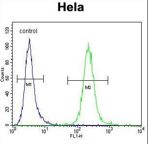 POLR1B Antibody flow cytometry of HeLa cells (right histogram) compared to a negative control cell (left histogram). FITC-conjugated goat-anti-rabbit secondary antibodies were used for the analysis.