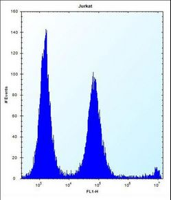 POLR2G Antibody flow cytometry of Jurkat cells (right histogram) compared to a negative control cell (left histogram). FITC-conjugated donkey-anti-rabbit secondary antibodies were used for the analysis.