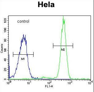 POLR3H Antibody - RPC8 Antibody flow cytometry of HeLa cells (right histogram) compared to a negative control cell (left histogram). FITC-conjugated goat-anti-rabbit secondary antibodies were used for the analysis.