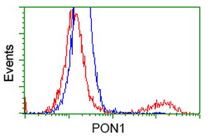 HEK293T cells transfected with either overexpress plasmid (Red) or empty vector control plasmid (Blue) were immunostained by anti-PON1 antibody, and then analyzed by flow cytometry.
