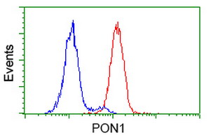 Flow cytometry of HeLa cells, using anti-PON1 antibody (Red), compared to a nonspecific negative control antibody (Blue).