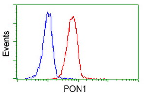 Flow cytometry of Jurkat cells, using anti-PON1 antibody (Red), compared to a nonspecific negative control antibody (Blue).