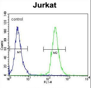 POTEB3 / POTE-15 Antibody - POTEB Antibody flow cytometry of Jurkat cells (right histogram) compared to a negative control cell (left histogram). FITC-conjugated goat-anti-rabbit secondary antibodies were used for the analysis.