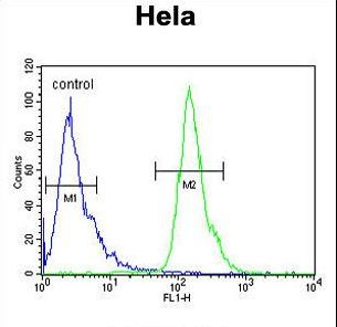 POTEH Antibody - POTEH Antibody flow cytometry of HeLa cells (right histogram) compared to a negative control cell (left histogram). FITC-conjugated goat-anti-rabbit secondary antibodies were used for the analysis.