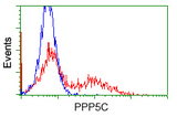HEK293T cells transfected with either pCMV6-ENTRY PPP5C (Red) or empty vector control plasmid (Blue) were immunostained with anti-PPP5C mouse monoclonal(Dilution 1:1,000), and then analyzed by flow cytometry.