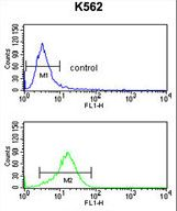 PRAME Antibody - MAPE Antibody flow cytometry of K562 cells (bottom histogram) compared to a negative control cell (top histogram). FITC-conjugated goat-anti-rabbit secondary antibodies were used for the analysis.
