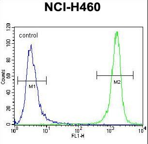 PRAMEF8 Antibody flow cytometry of NCI-H460 cells (right histogram) compared to a negative control cell (left histogram). FITC-conjugated goat-anti-rabbit secondary antibodies were used for the analysis.