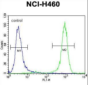 PREX1 Antibody flow cytometry of NCI-H460 cells (right histogram) compared to a negative control cell (left histogram). FITC-conjugated goat-anti-rabbit secondary antibodies were used for the analysis.