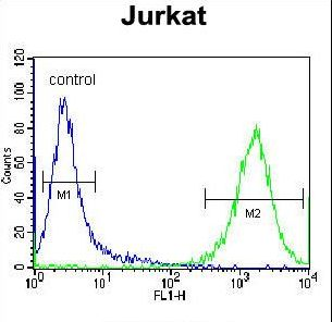 PRMT4 / CARM1 Antibody - PRMT4 Antibody flow cytometry of Jurkat cells (right histogram) compared to a negative control cell (left histogram). FITC-conjugated donkey-anti-rabbit secondary antibodies were used for the analysis.