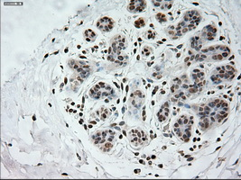 IHC of paraffin-embedded breast tissue using anti-PROM2 mouse monoclonal antibody. (Dilution 1:50).