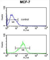 PRPF19 / PRP19 Antibody - PRPF19 Antibody flow cytometry of MCF-7 cells (bottom histogram) compared to a negative control cell (top histogram). FITC-conjugated goat-anti-rabbit secondary antibodies were used for the analysis.