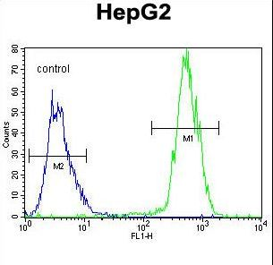PRRT1 Antibody - PRRT1 Antibody flow cytometry of HepG2 cells (right histogram) compared to a negative control cell (left histogram). FITC-conjugated goat-anti-rabbit secondary antibodies were used for the analysis.