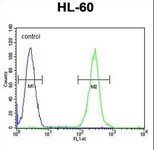 PRSS3 Antibody flow cytometry of HL-60 cells (right histogram) compared to a negative control cell (left histogram). FITC-conjugated goat-anti-rabbit secondary antibodies were used for the analysis.