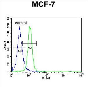 PSG7 Antibody - PSG7 Antibody flow cytometry of MCF-7 cells (right histogram) compared to a negative control cell (left histogram). FITC-conjugated goat-anti-rabbit secondary antibodies were used for the analysis.