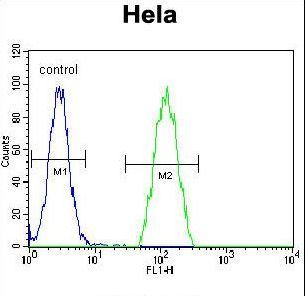 PSMB8 / LMP7 Antibody - PSMB8 Antibody flow cytometry of HeLa cells (right histogram) compared to a negative control cell (left histogram). FITC-conjugated goat-anti-rabbit secondary antibodies were used for the analysis.