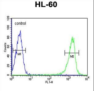 PSME1 Antibody flow cytometry of HL-60 cells (right histogram) compared to a negative control cell (left histogram). FITC-conjugated goat-anti-rabbit secondary antibodies were used for the analysis.