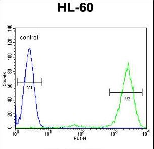PTMA / Prothymosin Alplha Antibody - PTMA Antibody flow cytometry of HL-60 cells (right histogram) compared to a negative control cell (left histogram). FITC-conjugated goat-anti-rabbit secondary antibodies were used for the analysis.
