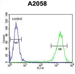 PTMS Antibody flow cytometry of A2058 cells (right histogram) compared to a negative control cell (left histogram). FITC-conjugated goat-anti-rabbit secondary antibodies were used for the analysis.