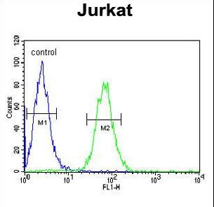 PTPN11 / SHP-2 / NS1 Antibody - PTPN11 Antibody flow cytometry of Jurkat cells (right histogram) compared to a negative control cell (left histogram). FITC-conjugated goat-anti-rabbit secondary antibodies were used for the analysis.