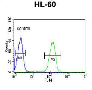 PV1 / PLVAP Antibody - PLVAP Antibody flow cytometry of HL-60 cells (right histogram) compared to a negative control cell (left histogram). FITC-conjugated goat-anti-rabbit secondary antibodies were used for the analysis.