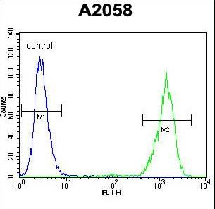 RAB10 Antibody flow cytometry of A2058 cells (right histogram) compared to a negative control cell (left histogram). FITC-conjugated goat-anti-rabbit secondary antibodies were used for the analysis.